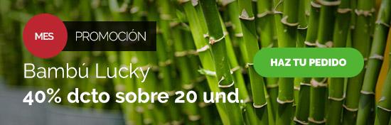 Vara Entera Bambú