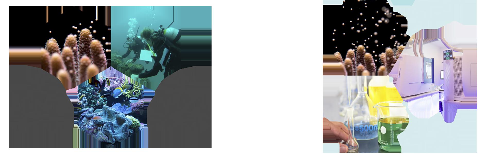 Diferencia Triton