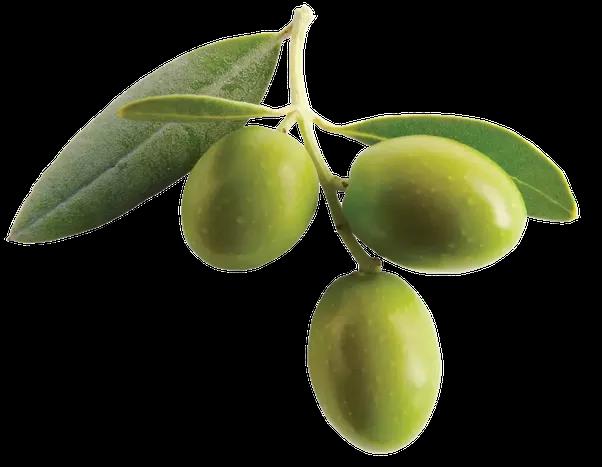 Aceite de Oliva 100% Arbequina